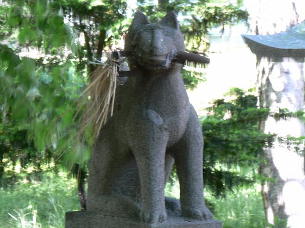 山本稲荷神社P1010675