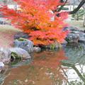 Photos: LR-20131208_170209