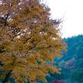 Photos: LR-20131208_171033
