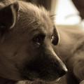 Photos: 愛犬の年末