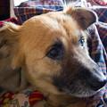 Photos: 冬の愛犬