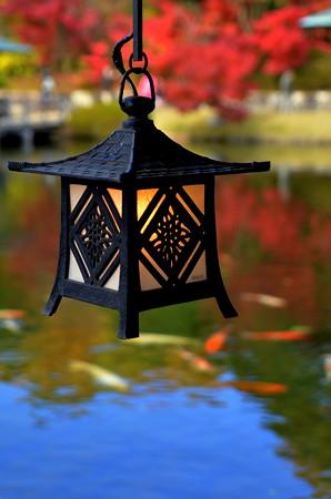 紅葉と行灯と鯉