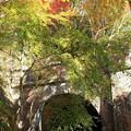 愛岐トンネル 紅葉 IMG_5232_2