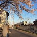 桜とJR東海211系