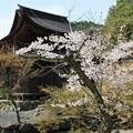 虎渓山永保寺の桜 IMG_9922_2