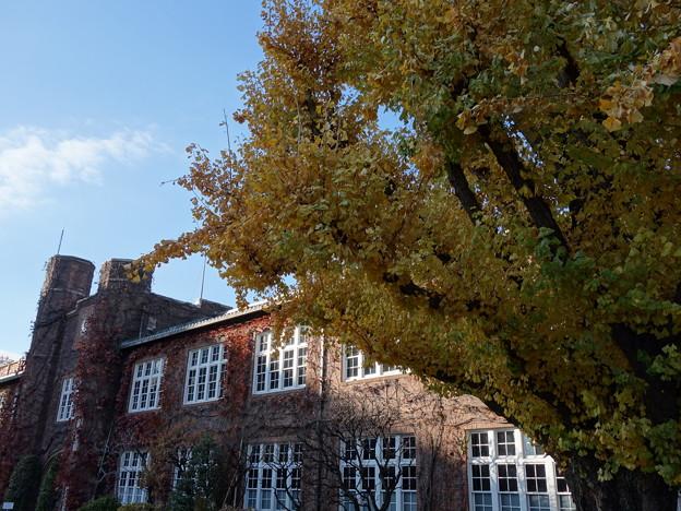 立教大学 (豊島区西池袋)