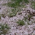 Photos: 桃色絨毯