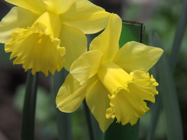 Photos: 春うららか