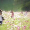 写真: コスモス園とカメラマン。