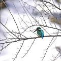 ユキカワ鳥もまた旅人なり。
