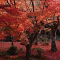 Photos: 圓光寺庭園