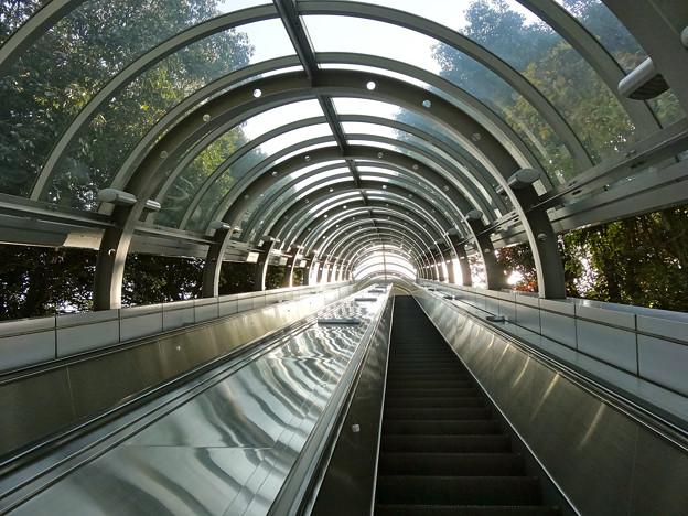 比治山スカイウォーク Hijiyama sky walk