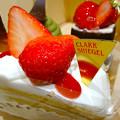 Photos: CLARK SHIEGEL クラークシーゲル