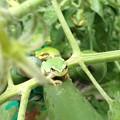 写真: カエル、侵攻
