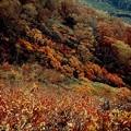 Photos: 平標山04