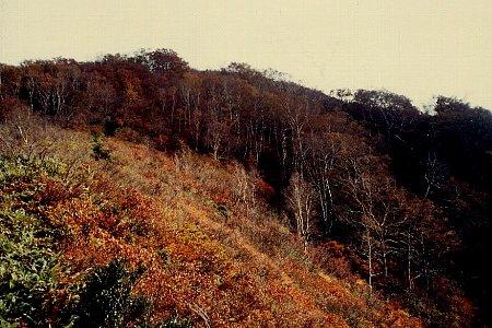 Photos: 平標山05