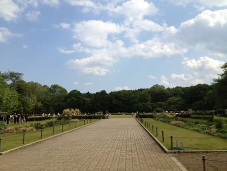 神代植物園 芝生広場