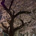 Photos: 大蔵住宅前