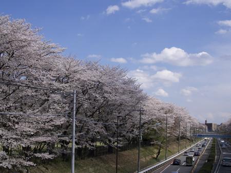 野川公園(4)