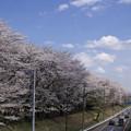Photos: 野川公園(4)