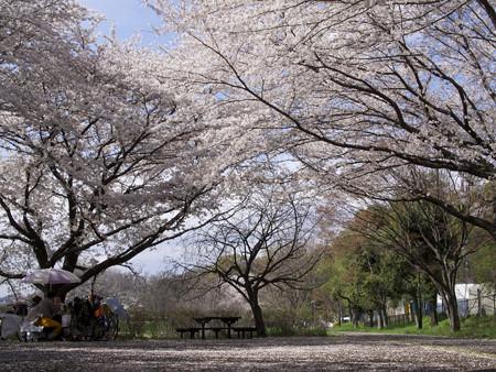 武蔵野公園(4)