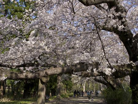 神代植物公園(4)