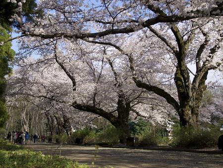 神代植物公園(6)
