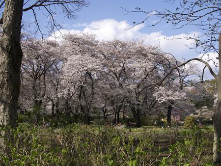 神代植物公園(7)