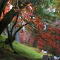 築地塀周辺の紅葉