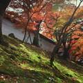 築地塀周辺の紅葉4