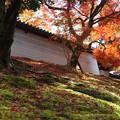 築地塀周辺の紅葉5