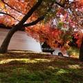 築地塀周辺の紅葉6