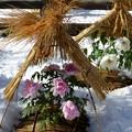雪のぼたん苑