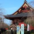 Photos: 桜か松か上野のお山は