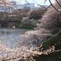 桜満開うしがふち