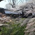 桜満開・田安門