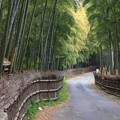 竹の径・竹林