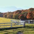 Photos: 牧場の紅葉?