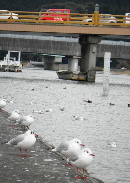 瀬田の唐橋 (4)