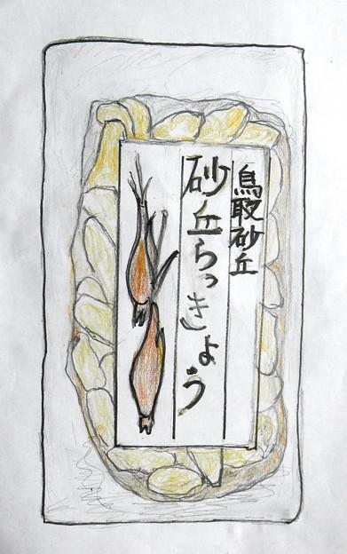 鳥取砂丘のラッキョウ