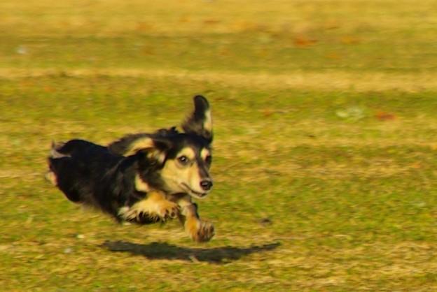 飛行犬カノン