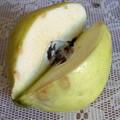 Photos: 謎の果物「スファルジル(Safarjal)」