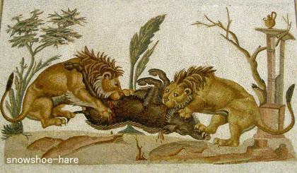 イノシシを襲うライオンたち
