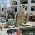 写真: 港になぜかこんな鳥が