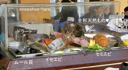 本日の魚&魚介類