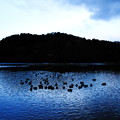 Photos: 三島池