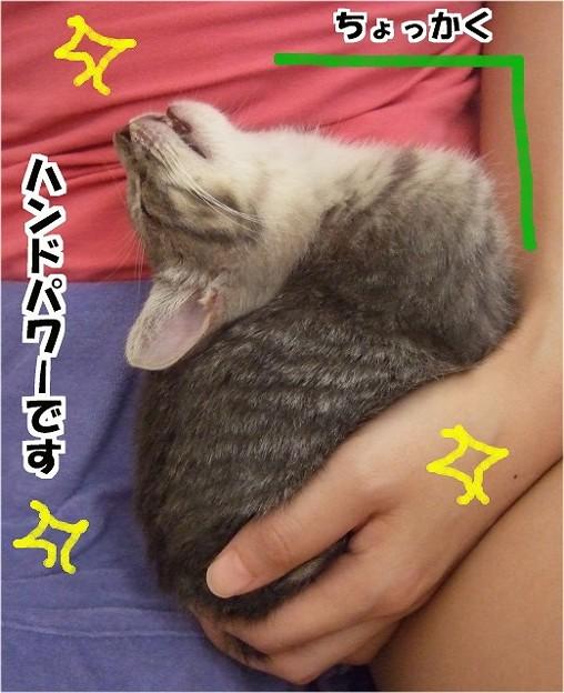ハンドパワーで子猫もイチコロ