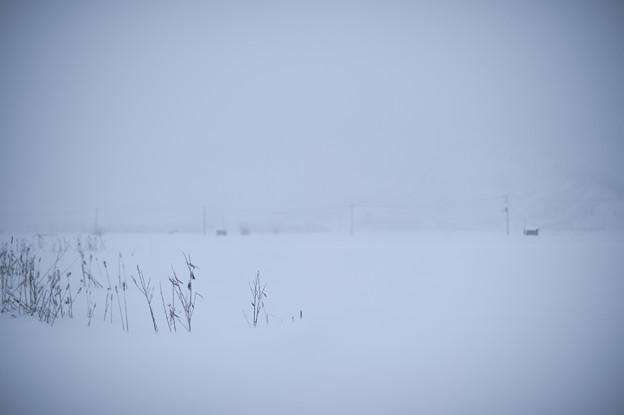 その冬の傍に居る
