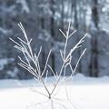 写真: 雪の中