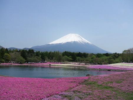富士芝桜13
